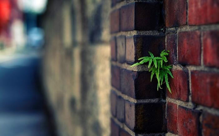 plant-urban-brick-wall